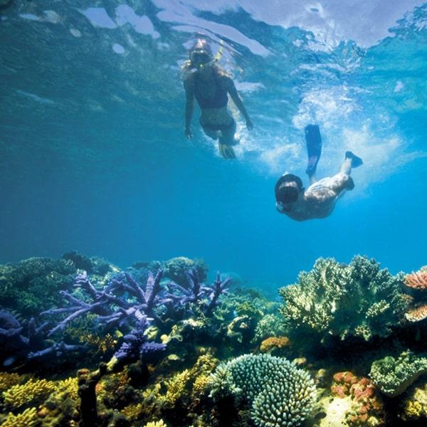 snorkling di pulau macan kepulauan seribu