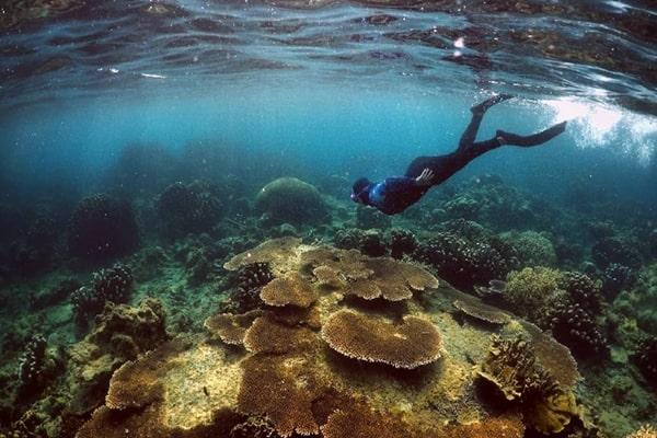 sport lokasi tempat snorkling di pulau harapan kepulauan seribu jakarta