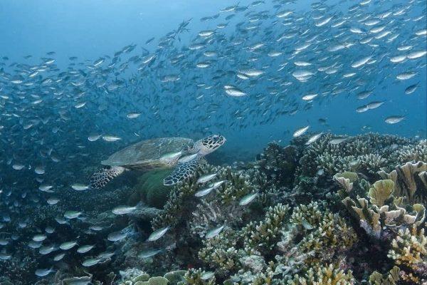 sport snorkling pulau pramuka kepulauan seribu jakarta