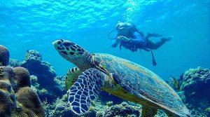 wisata ke Pulau Seribu