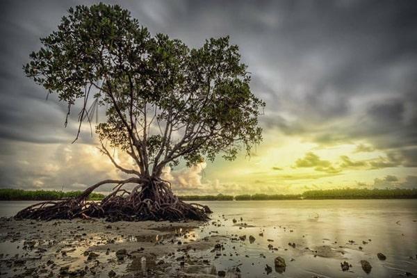 wisata pulau harapan jalan -jalan taman mangrove
